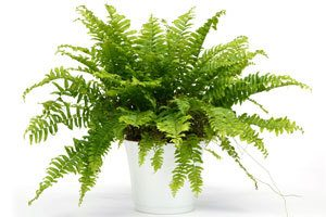 Use Plants To Attract Wealth